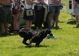 Muncaster Gundogs at Coniston Country Fair