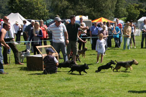 Terrier Racing at Coniston Country Fair