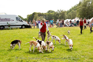 Coniston Foxhounds at Coniston Country Fair